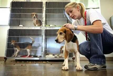 Lauren With Beagle