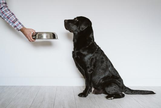 owner giving dog food