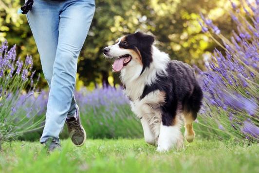 dog walking alongside owner