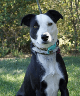 A black and white rescue dog from Eastern Plains Animal Welfare Alliance