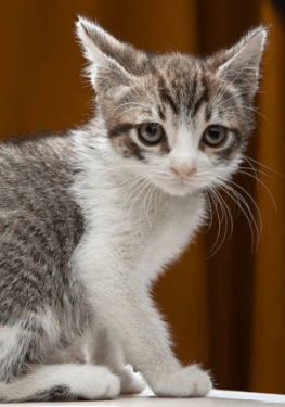 a kitten rescue from MeeowzResQ