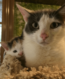 A cat and kitten from New England Society for Abandoned Animals