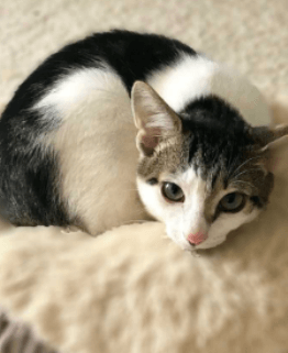 a kitten laying on bed from Paws for Life