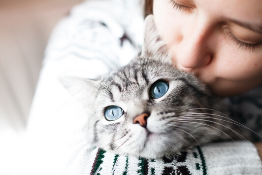 Caring-for-Senior-Cats