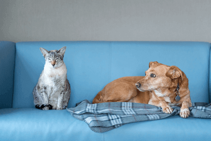 Dog and cat laying on a blus couch