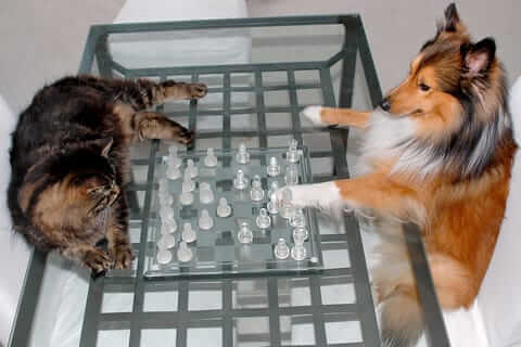 Cat and Dog playing chess