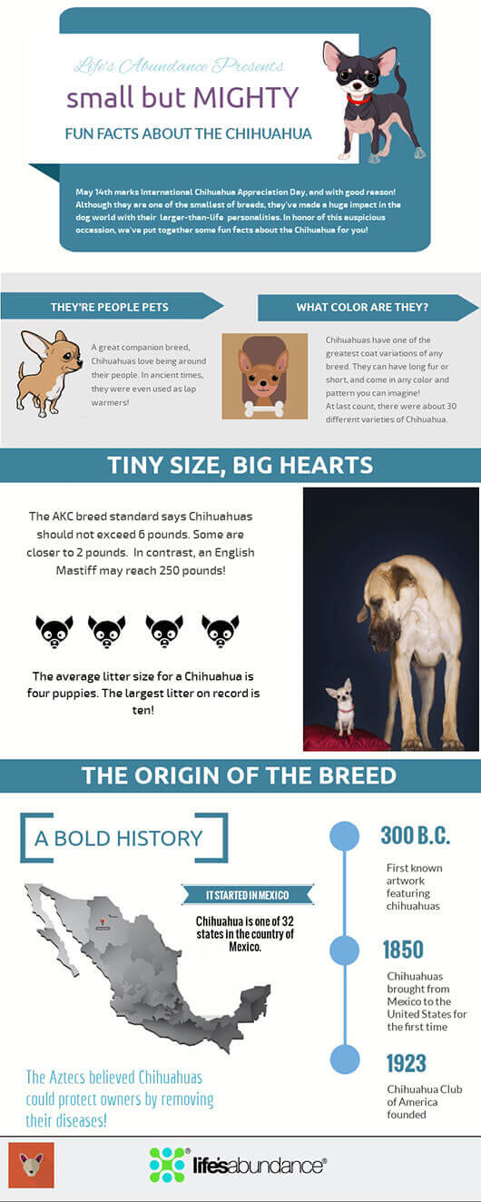 Chihuahua Appreciation Infographic