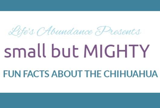 Chihuahua Appreciation Day