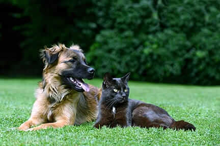 Dog and cat laying on grass