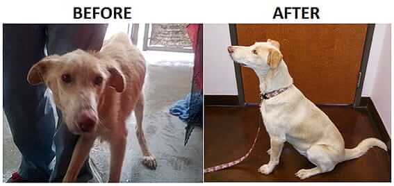 Faith Before After