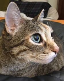 Golden Oldies Cat Rescue