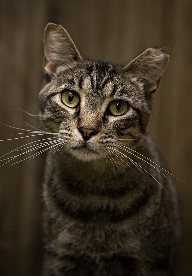 Goochland Community Cats