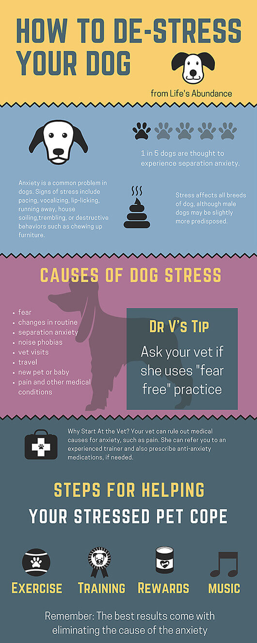 How-to-Avoid-Dog-Stress