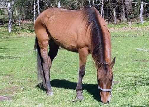 Jessi rescued horse