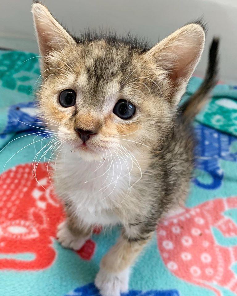 Newborn Kitten Rescue
