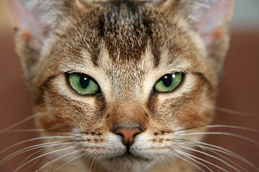 Striking-Kitty-Face