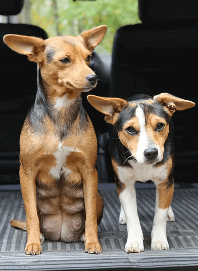 2 small dogs from West Tennessee Spay Neuter Coalition
