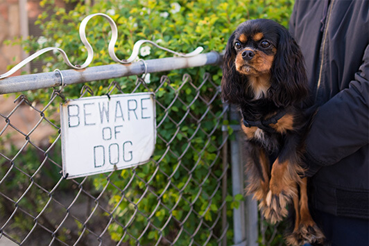 Small Dog In Front of Beware of Dog Sign
