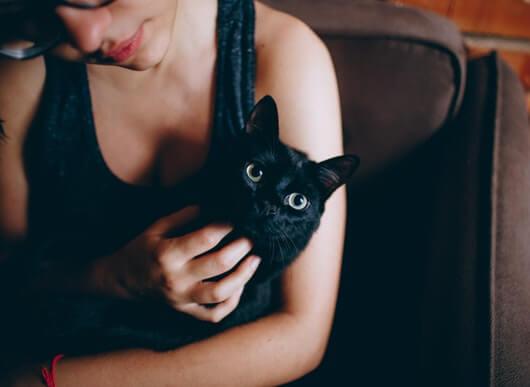 cat-petting