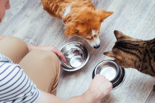 owner feeding dog and cat
