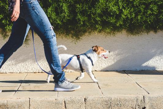 Dog Exercising to Lose Weight