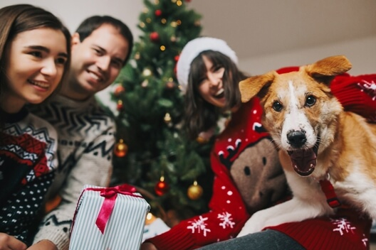 family-dog-christmas-celebration