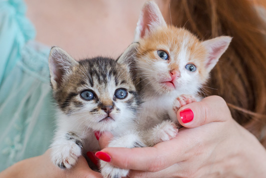 woman holding two kittens