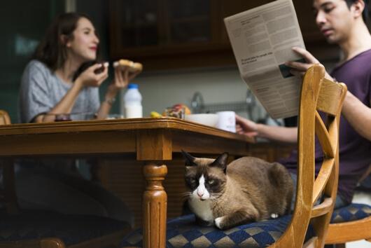 meal-time-with-kitty-lifes-abundance