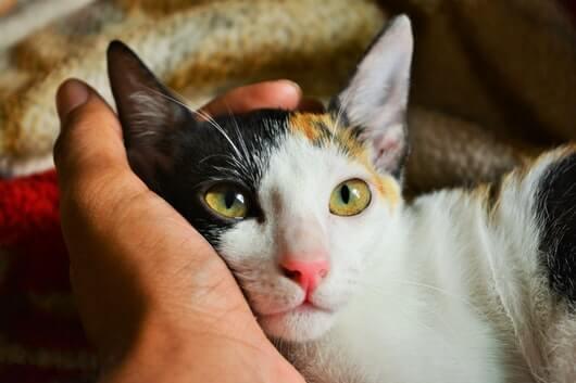 nuzzle-cat