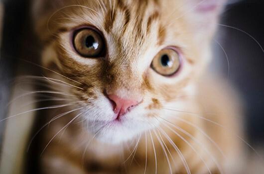 orange-tabby-close-up