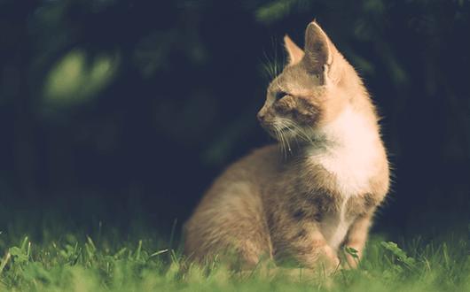 orange-tabby-outdoors