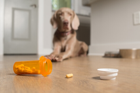 pill-spill-dog