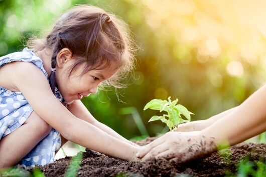 planting-trees-for-the-future