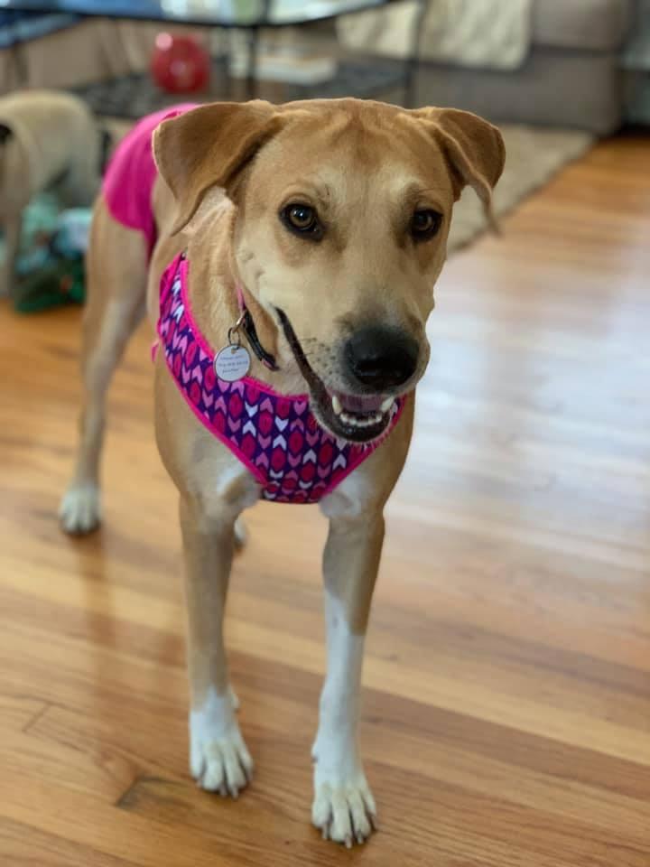 Sadie's Safe Harbor Canine Rescue