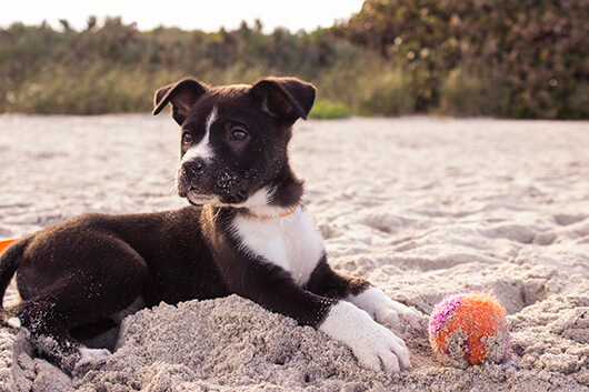 smart-puppy-on-beach