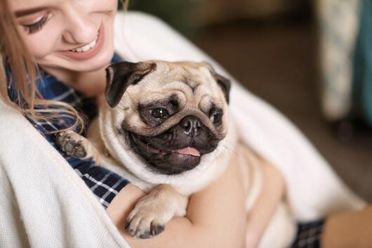 woman-adopts-pug
