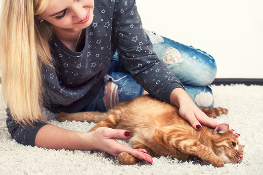 woman petting cat on carpet