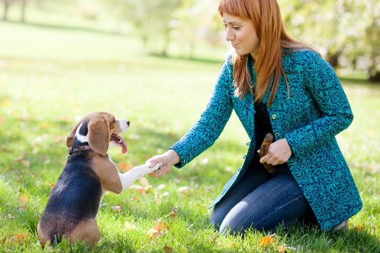 woman giving dog treat