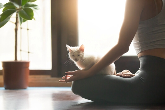 yoga-with-your-cat